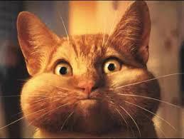 حبايبي القطط Images?q=tbn:ANd9GcTrcvJdPwFh2xUMnBJ6QON7bBTbpfrwuOeajl_XfFpNxn7-dCyr