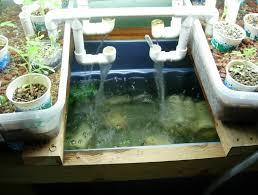 Ways How To Build Backyard Aquaponics Greenhouse Home - Backyard aquaponics system design