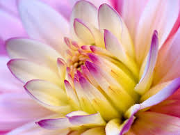 வால்பேப்பர்கள் ( flowers wallpapers ) 01 Images?q=tbn:ANd9GcTryyRreLeqX9HhuxNbaQZm3FD8wq6_nuYskM6VmgjRJ5m87qXUBQ