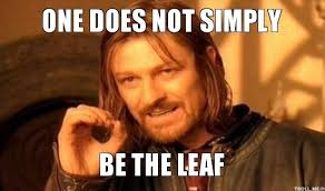 photo One Does Not Simply Be The Leaf �.gif