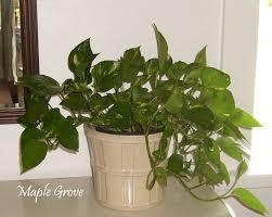 maple grove houseplant makeover