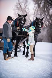 thanksgiving horse pictures sleigh and hay rides in park city utah