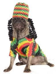 Dog Costumes Halloween 41 Pets Halloween Costumes Images Pet