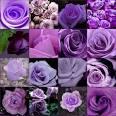 Bloggang.com : Summer Flower : ดอกไม้สีม่วง