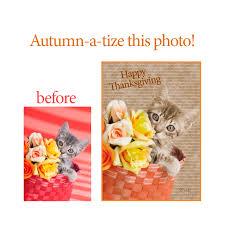 greeting for thanksgiving retro kitten greeting card archives kelly richardson