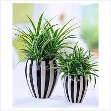 Η καλλιέργεια των φυτών εσωτερικού χώρου το χειμώνα Images?q=tbn:ANd9GcTveBH1BaH7dIKgiLAR4y3aLN8CEcgHqRchLMW3y-y21IOjBBlzXw