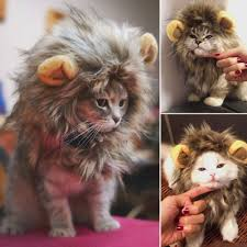 furry lion mane wig for cat dress up with ears furry friends