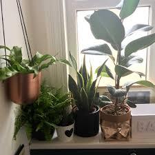 100 low light houseplants 17 best houseplants for low light