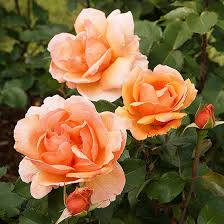 preparing your garden for winter flowers orange color and gardens