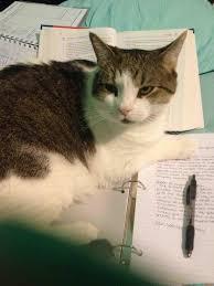 Forgot to do my homework   Nursing resume writing service