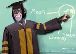 scimmia docente