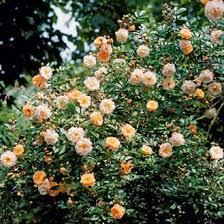 http://t1.gstatic.com/images?q=tbn:Ja2NzI7npc2CSM:http://www.magazine-avantages.fr/data/photos/F0/7d962e252derrain.jpg