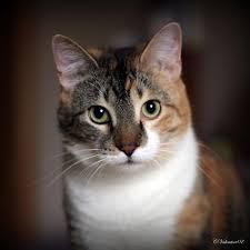 Free forum : Warrior Cats - Portal Sagekit%2520Shadowclan%2520kit%2520Calico%2520Warriors%2520Cats
