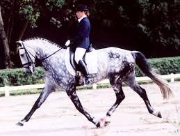 Dressage in the Pony Club!