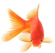 مزایای کود ماهی