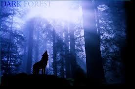 Тъмната гора