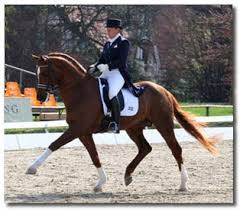 In a well executed dressage