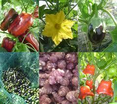http://t1.gstatic.com/images?q=tbn:PjChr20h6MsbdM:http://www.champ-soleil.eu/media/fck/image/fr/entreprise/agriculture-biologique-legumes-fruits-ab-mediterranee-nice.jpg