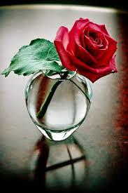 .. الورد الأحمر 'ـ  Uploads