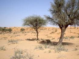 Desert Trees - usually on the frier side  because they get virtually no water, spiny and prickily so animals wont eat their leaves.