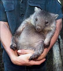 First Bigfoot, Now A Wombat!