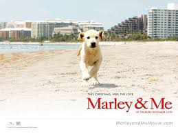 2008 Marley and Me wallpaper
