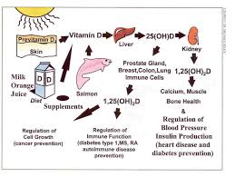 The process by which vitamin D