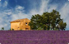 fields in Provence, France