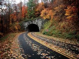 عکس جاده در بین درختان جنگلی پاییزی