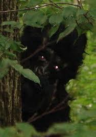 New Bigfoot Photos and Videos