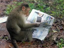 monkey_wideweb__470x353,2.jpg