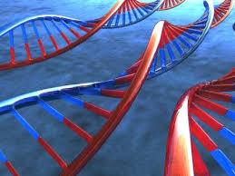 http://t1.gstatic.com/images?q=tbn:WIYJhoIxBdbX5M:http://www.mp3hi5.com/Dep_Genetica.jpg&t=1