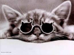 les chaton tros mignon!!!