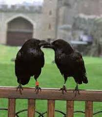 Destinations UK - The Ravens