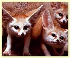 إليكم صور الحيوان الدي تشتهر به الجزائر وهو رمز لها Canines25