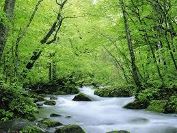 عکس جنگل سر سبز در استرالیا