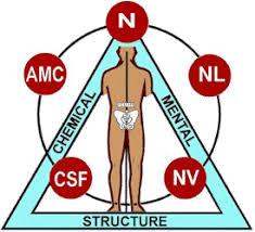 Amicay Kinesiology