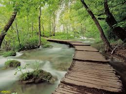 عکس جاده چوبی در داخل دختان جنگل