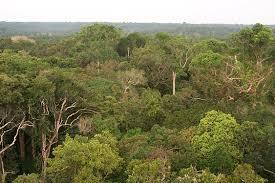 جنگل , طبیعت , درخت