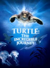 Turtle: The Incredible Journey (2009) Icon