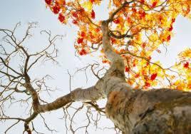 عکس شاخه های درخت از پایین