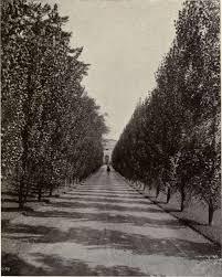 vagon brei- free tracks to download An-Avenue-of-Poplars