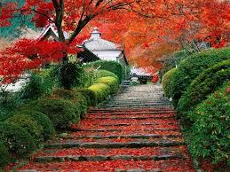 Harika Sonbahar Görüntüsü