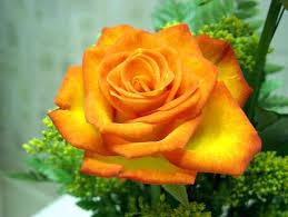 عکس زیباترین گل