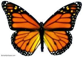 external image 019-monarch_butterfly1.jpg