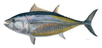 Scientists: Gulf oil spill threatens breeding ground for bluefin tuna  Read more: http://www.mcclatchydc.com/2010/06/18/96194/scientists-gulf-oil-spill-threatens.html#ixzz0rJwdMK1s