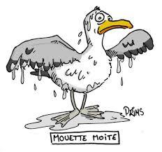mouette_moite