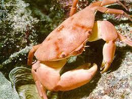 """[PATCH du FCS] """"fabrication et dérivés"""" - Page 8 Crabe"""