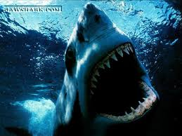 Great White Shark Attack at