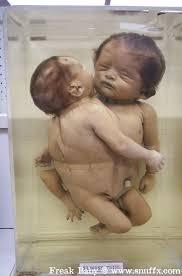 http://images.google.co.id/images?hl=id&um=1&sa=1&q=kloning+manusia&btnG=Telusuri+gambar&aq=f&oq=&start=0